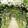 Арки для саду з квітів: гідне прикраса ділянки