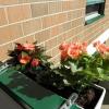 Балконні квіти - які краще вибрати