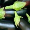 Багатий урожай баклажанів - це нескладно