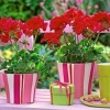 Квіти по фен шуй: значення і дію