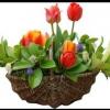 Фен шуй кімнатних квітів: краса і гармонія