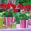 Фен шуй: рослини і любов
