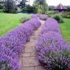 Фен шуй: квіти, що прикрашають садову ділянку