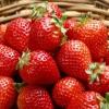 Ягоди полуниці з насіння