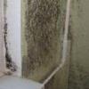 Як позбавиться від цвілі на стінах у житловій кімнаті і ванною