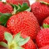 Як правильно садити полуницю?