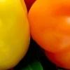 Як правильно вирощувати солодкий перець?