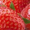 Як садити полуницю?