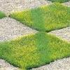 Як зробити газон своїми руками: трава без турбот