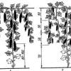 Як виростити багатий урожай: посадка огірків