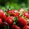 Як виростити полуницю на своїй садовій ділянці