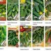 Як виростити огірки на грядці?