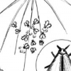 Як вивести білокрилку