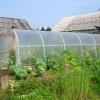 Як виростити хороший урожай при низьких температурах?