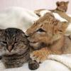 Яка тварина завести в квартирі: поради по утриманню та догляду за домашніми тваринами
