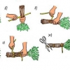 Який виберемо банний віник: дубовий або березовий, кропив'яний?