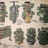 Як вертикально виростити полуницю