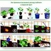 Основні моменти вирощування вікторії в теплиці