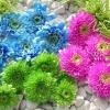 Основні рекомендації по вирощуванню хризантем в теплицях