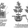 Детальна технологія вирощування томатів в городі