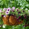 Підвісні клумби: оформляємо сади семіраміди на своїй ділянці