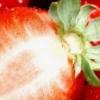 Посадка полуниці восени