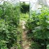 Правила посадки овочевих культур в теплиці: питання сумісності