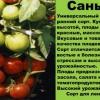 Правила вирощування помідорів сорту санька