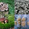 Принципи вирощування грибів на садовій ділянці