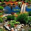 Рослини для ставка: незмінний елемент ландшафтного дизайну