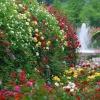 Роза в дизайні саду: королева, богиня, фаворитка