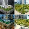 Сад на даху: оригінальні способи озеленення дахів будинків з фото