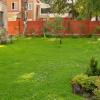 Сама невибаглива газонна трава