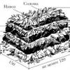 Печериці на грядках: як виростити?