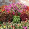 Схеми посадки квітників