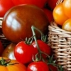 Сорти томатів і схема їх посадки