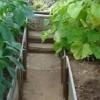 Спільна посадка овочів в теплиці