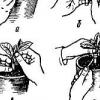 Технологія вирощування дині в теплиці і відкритому грунті