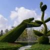 Топіарі - зелені шедеври