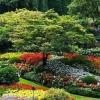 Варіанти створення клумб і квітників