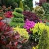 Вічнозелені рослини для озеленення саду: літо на ділянці цілий рік