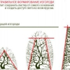 Види ліан для спорудження живого паркану