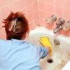 Відновлення емалевої поверхні ванни