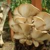 Вирощування грибів: що потрібно знати?