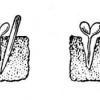 Вирощування і догляд за болгарським перцем