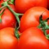 Вирощування томатів по мітлайдера